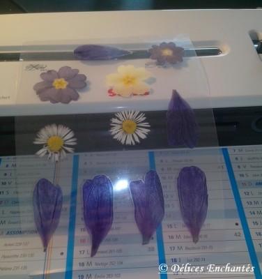 Fleurs plastifiées
